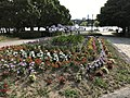 Flowers in Ohori Park 2.jpg