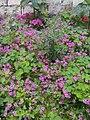Flowers of Baghdad 24.jpg