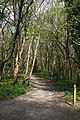 Footpath through Blackball Plantation - geograph.org.uk - 1280916.jpg