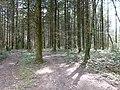 Forêt @ Vaulx (51056327026).jpg