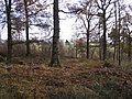 Forest edge - geograph.org.uk - 625453.jpg