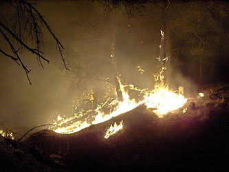 Forest fire at night.jpg