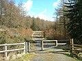 Forestry track in Coed Llyn y Garnedd - geograph.org.uk - 1043892.jpg