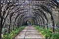 Foxglove Spires Open Garden. Peter Neaum. - panoramio.jpg