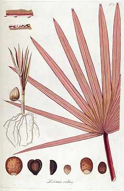 Fragmenta botanica, figuris coloratis illustrata (T. 8) (7943671232)
