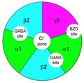 GABAA-receptor-protein-example.png