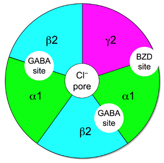 GABAA receptor positive allosteric modulator - Fig 2. Schematic diagram of a GABAA receptor protein ((α1)2(β2)2(γ2)) which illustrates the five combined subunits that form the protein, the chloride (Cl-) ion channel pore, the two GABA active binding sites at the α1 and β2 interfaces, and the benzodiazepine (BZD) allosteric binding site at the α1 and γ2 interface.