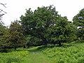 GOC Berkhamsted & Frithsden 011 Ashridge Estate (28349334111).jpg