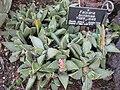 Gardenology-IMG 5316 hunt10mar.jpg