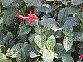 Gardenology.org-IMG 0409 rbgs10dec.jpg