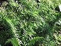 Gardenology.org-IMG 0808 rbgs10dec.jpg
