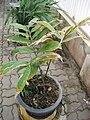 Gardenology.org-IMG 7564 qsbg11mar.jpg