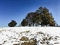 Georgia snow IMG 5768 (38253153844).jpg