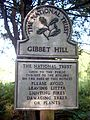 Gibbet Hill, Hindhead NT sign.jpg