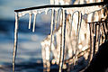 Glittering Icicles (5392744324).jpg
