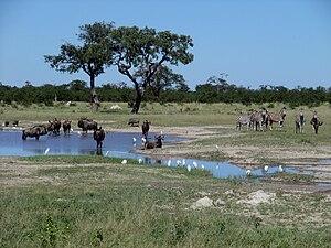 Chobe National Park - Gnus and zebras in Chobe National Park