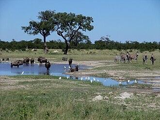 Chobe National Park - Wildebeest and zebras in Chobe National Park