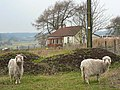 Goats and cottage, Pitmedden - geograph.org.uk - 120465.jpg