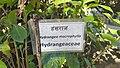 Godawari Botanical garden 37.jpg
