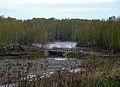 Gorodets. Belaya River.jpg