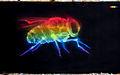 Graffiti in Shoreditch, London - Rainbow Fly by Shok1 (9444356455).jpg