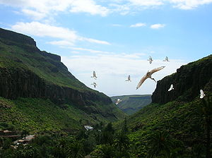 "Birds flying in freedom in the zoological ""Pal..."