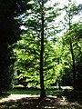 Green Tree - geograph.org.uk - 537329.jpg