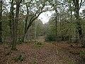 Gritnam Wood, track - geograph.org.uk - 1570965.jpg