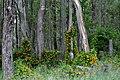 Growing wild - panoramio.jpg