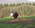 Guardian of the hay - geograph.org.uk - 1614803.jpg