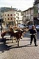 Guimarães-Attelage traditionnel-196708.jpg