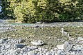 Haast River in Mount Aspiring National Park 03.jpg