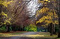 Hagley Park. Christchurch New Zealand. (9562609384).jpg