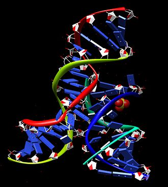 Hairpin ribozyme - Image: Hairpin ribozyme crystal structure UR0109
