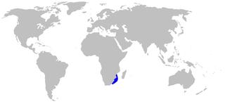 Lined catshark Species of shark