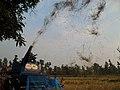 Harvesting - panoramio.jpg
