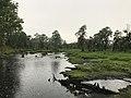 Hayes Pond.jpg