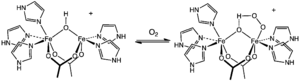 Hemerythrin - Active site of hemerythrin before and after oxygenation.