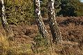 Herbst Elfenmeer 1.jpg