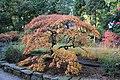 Herbst im Rombergpark - panoramio (6).jpg