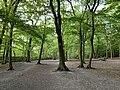 Highgate Wood, August 2020.jpg