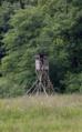 Hoher Vogelsberg Breungeshainer Heide Geiselstein Goldwiese Shooting stand.png