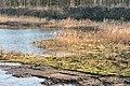 Hollandse Hout, natuurgebied in Flevoland. 07-02-2020. (actm.) 40.jpg