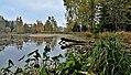 Horní ratajský rybník, CZ171018-001.jpg