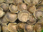 Huîtres plates de Logonna-Daoulas