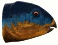 Hualianceratops wucaiwanensis2.png