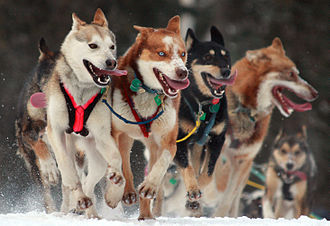 Mushing - Iditarod Trail Sled Dog Race 2010