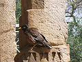 India-Qutb-Bird.jpg