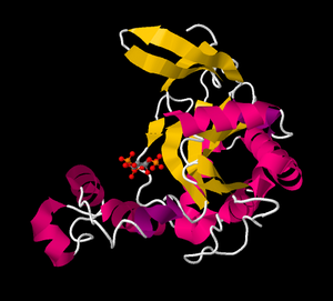 Inositol-trisphosphate 3-kinase - Inositol-trisphosphate 3-kinase C. PDB 2A98