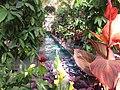 Inside the U.S. Botanic Garden Conservatory (14469321108).jpg